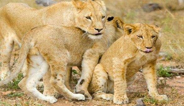 Fauna Südafrikas
