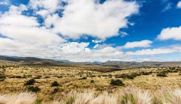 Flora Südafrikas
